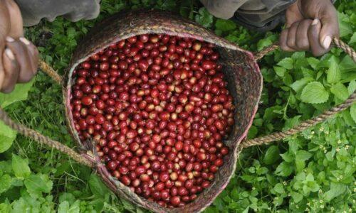 Blog - Coffee@Work: Koffie en koffieautomaten voor bedrijven